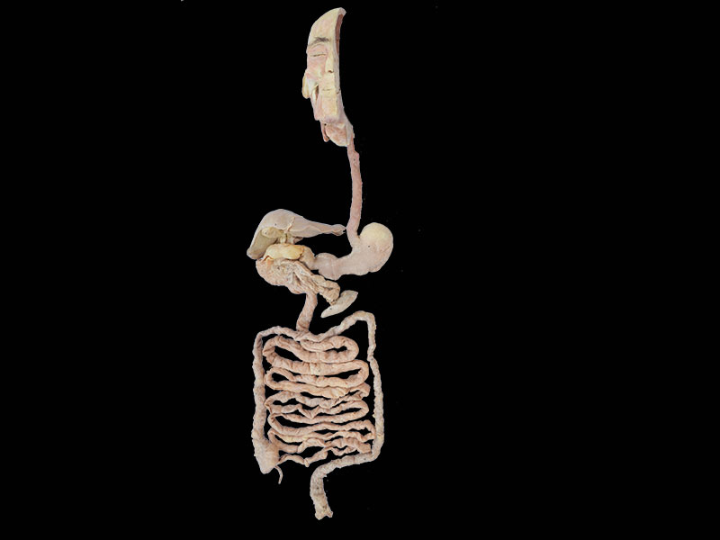 overview of digestive system