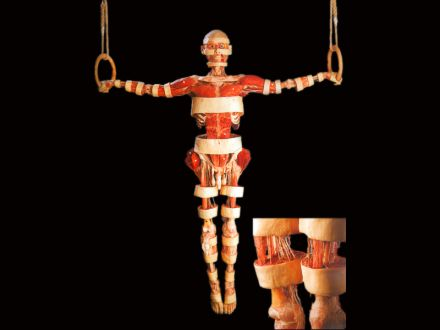 gymnasts plastinated specimens