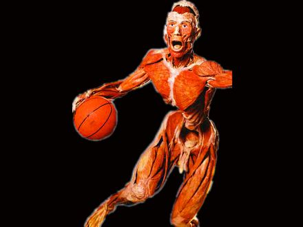 Playing basketball plastinated specimens
