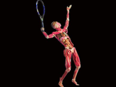 Tennis playing plastinated specimens( human specimens )